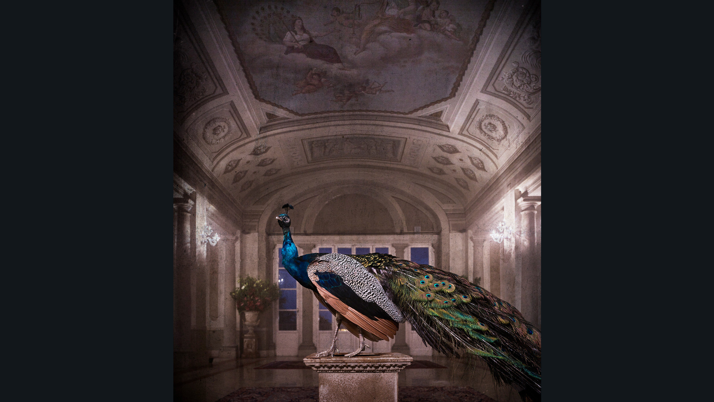 the Peacock at Bagni di Pisa